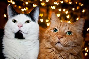 bigstock-two-loving-cats-58638161