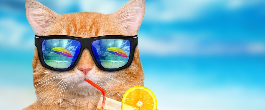 Red cat wearing glasses relaxing on the sea background.