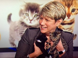 S.Harvey and Kittens