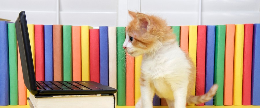 Small Orange and white tabby kitten sitting in front of a miniature laptop computer with colorful books in background. Facing computer looking at screen.