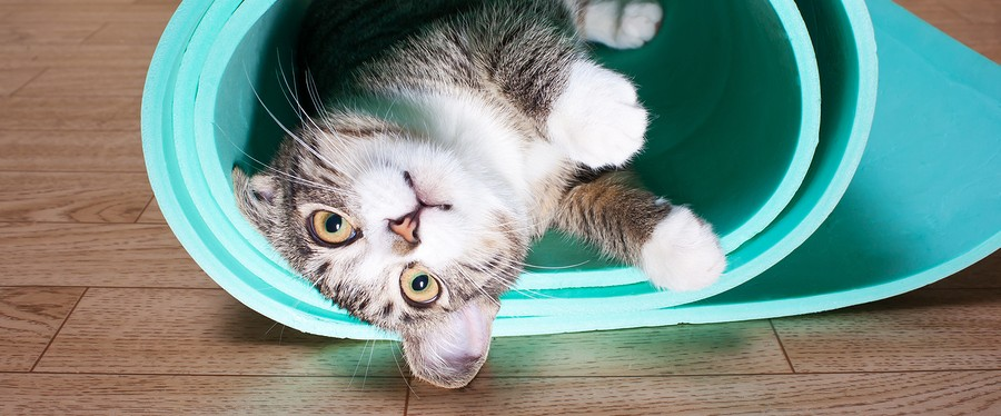Kitten lying on a yoga mat fitness sports fun cat