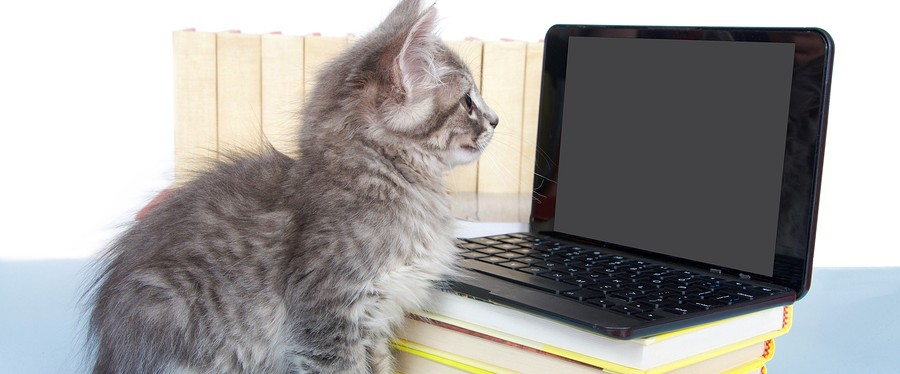 Gray tabby kitten looking at a blank screen on a miniature laptop type computer screen blank for your message. Piles of books next to and under computer. Back to school.