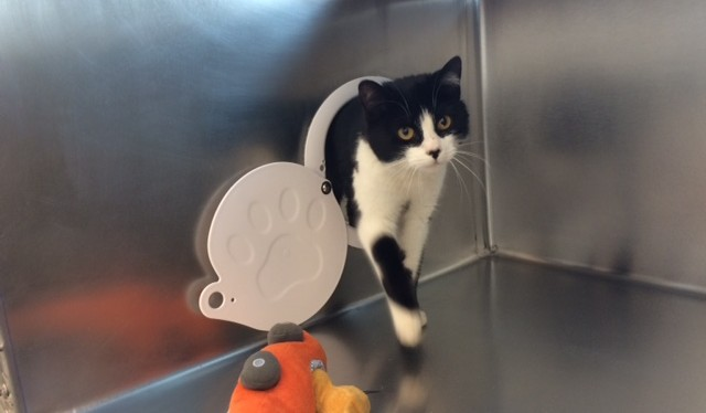 cute portal kitty at the MSPCA